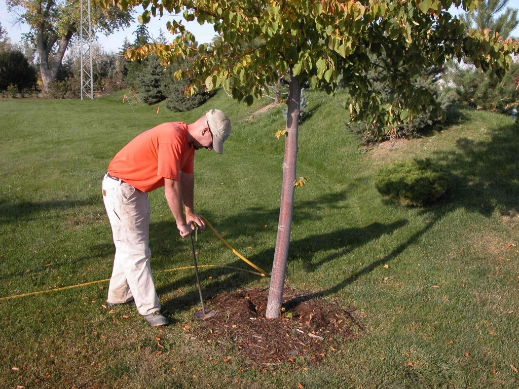 Deep Root Tree Fertilization - Boulder