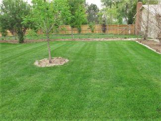 Organic Lawn Services